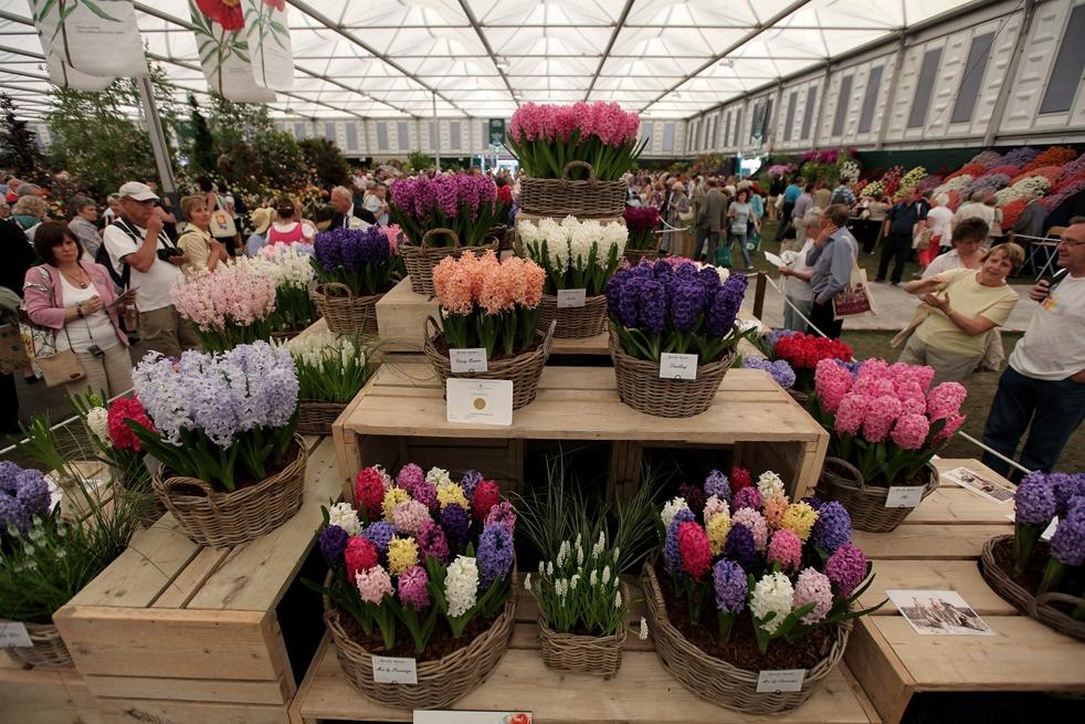 Где в омске лучше всего купить цветы, цветов интернет магазин